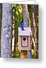 Eastern Bluebird Perched On Birdhouse Greeting Card