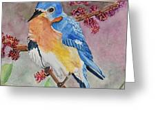Eastern Bluebird Vertical  Greeting Card