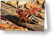 Eastern Cicada Killer Wasp Greeting Card
