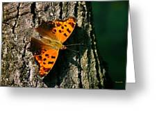 Eastern Comma Butterfly Greeting Card