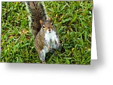 Eastern Gray Squirrel Greeting Card