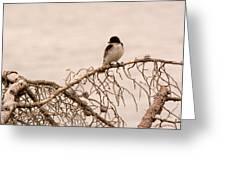 Eastern Kingbird Greeting Card