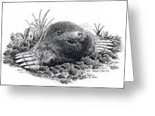 Eastern Mole Greeting Card
