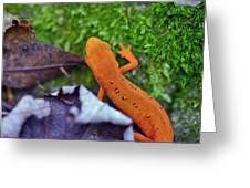 Eastern Newt Greeting Card