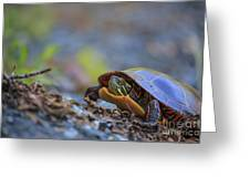 Eastern Painted Turtle Chrysemys Picta Greeting Card