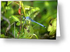 Eastern Pondhawk Dragonfly Greeting Card