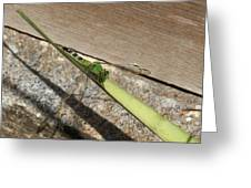 Eastern Pondhawk On A Leaf Greeting Card