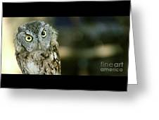 Eastern Screech Owl-6950 Greeting Card