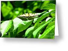 Wildlife Scenes #4 Greeting Card
