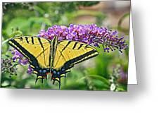 Eastern Swallowtail Greeting Card