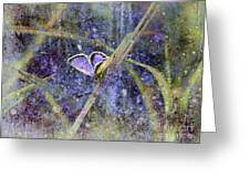 Eastern Tailed Blue Greeting Card