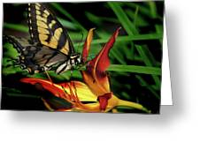 Eastern Tiger Swallow Tail Butterfly Greeting Card