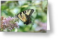 Eastern Tiger Swallowtail 2 Greeting Card