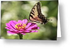 Eastern Tiger Swallowtail 2016-1 Greeting Card
