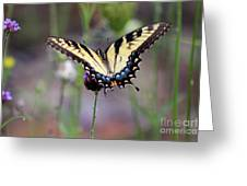 Eastern Tiger Swallowtail Butterfly In Garden 2016 Greeting Card