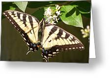 Eastern Tiger Swallowtail  Butterfly Wingspan Greeting Card
