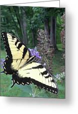 Eastern Tiger Swallowtail Sipping Nectar Greeting Card