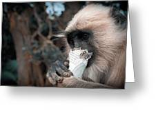 Eating Monkey Greeting Card