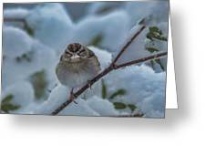 Eating Snow Greeting Card