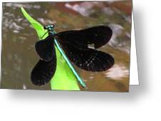 Ebony Jewel Damselfly Greeting Card