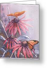 Echinacea And Butterflies Greeting Card