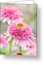 Echinacea Butterfly Kisses Greeting Card
