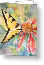 Echinacea Butterfly Greeting Card