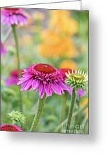 Echinacea Catharina Red  Greeting Card