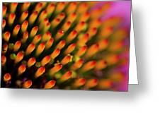 Echinacea Coneflower Abstract Greeting Card