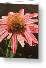 Echinacea Flower Greeting Card
