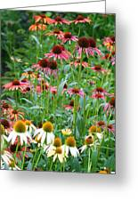 Echinacea Multi Mix Greeting Card