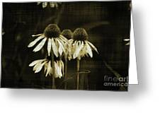 Echinacea Greeting Card by Terrie Taylor