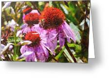 Echinacea Watercolor 2015 Greeting Card
