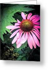 Echinacia Flower In The Rain Greeting Card