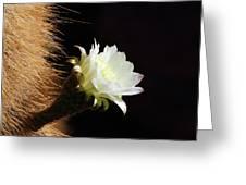 Echinopsis Atacamensis Cactus Flower Greeting Card