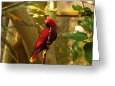 Eclectus Parrot Digital Oil Painting Greeting Card