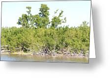 Eco Pond Greeting Card