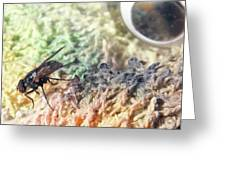 Ed The Fly  Greeting Card