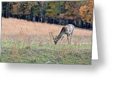 Edge Of The Forest Greeting Card