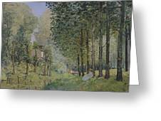 Edge Of The Wood Greeting Card
