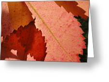 Edgy Leaves Greeting Card
