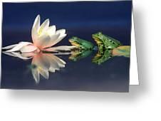 Edible Frog Rana Esculenta Two Frogs Greeting Card