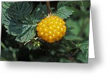 Edible Yellow Salmonberry Rubus Greeting Card by Rich Reid
