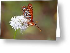 Edith's Checkerspot Five Greeting Card