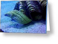 Eels Greeting Card
