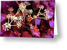 Efeu Ivy Vines Pink Greeting Card
