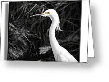 Egret 1 Greeting Card
