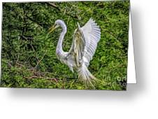 Egret - 3419 Greeting Card