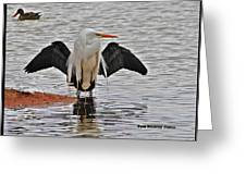 Egret And Cormorant Wings Greeting Card