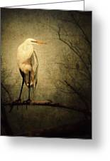 Egret And Eagle Greeting Card